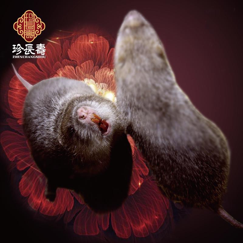 """【有机认证】只吃竹子,不是鼠的""""鼠""""(亿博app注册淀基地年产10万只)"""