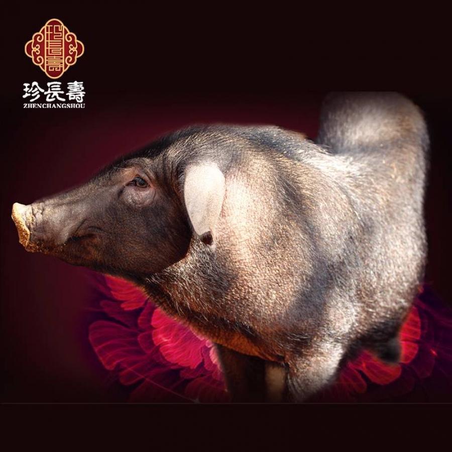 【有机认证】比羊吃草还多的猪,真正的食草猪(亿博app注册淀年产3万头)